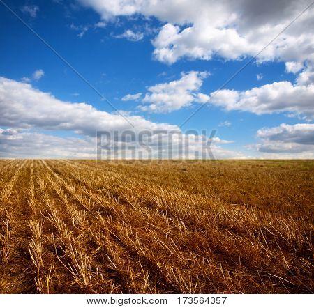 field after harverst