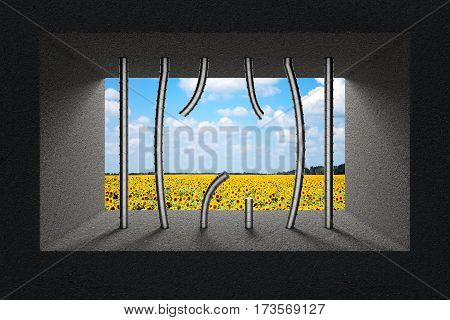 Sky and Sunflower Field Seen Through Broken Jail Bars in Prison Window extreme closeup. 3d Rendering.