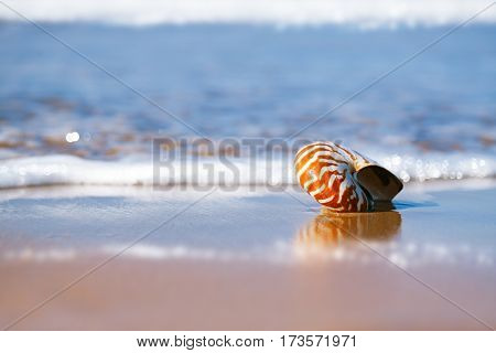 seashell nautilus on sea beach under sunset sun light, Agadir, Morocco
