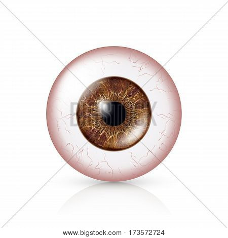 Conjunctivitis. Red Eye. Human Eyeball With Conjunctivitis Vector