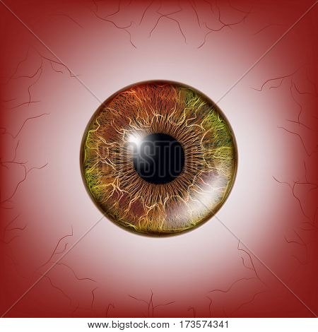 Red Eye. Scary Bloody Realistic Eyeballs. Spooky Human Eyeball With Grunge Blood Splatter. Vector illustration