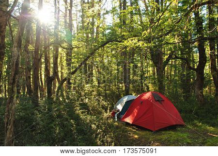 Camping tents inside of a forest / With the afternoon sun coming through the trees