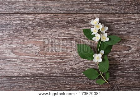 White jasmine flowers lie on a wooden background. Wedding invitation card with jasmine. Space for text and design. Jasmine on wooden table