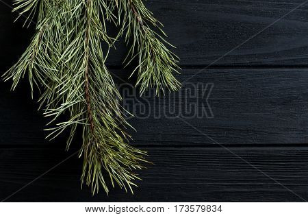 Pine branch on the wooden desk. Black background