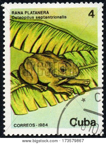 UKRAINE - CIRCA 2017: A stamp printed in Cuba shows a frog Rana platanera Osteopilus septentrionalis circa 1984