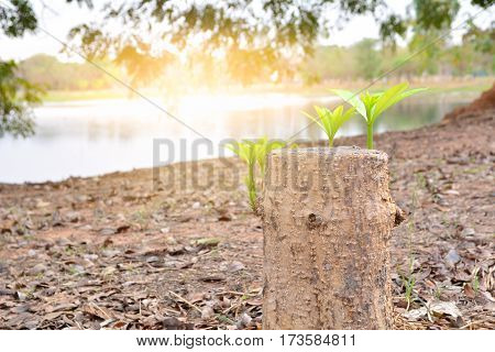 Young green leaves and branch growth with old tree stump beautiful landscape
