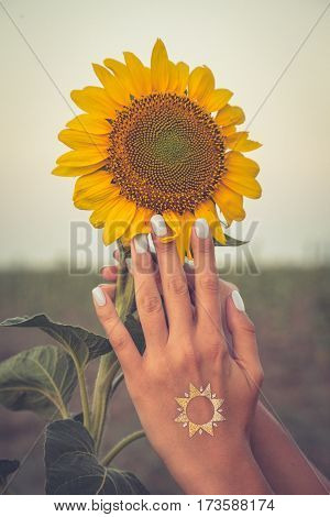 Beautiful Sunflower And  Woman Hand At Sunset. Toning Photo