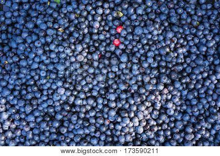 Closeup of freshly picked blueberries, top view