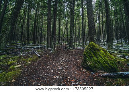 Image of a moss covered forest floor