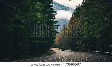Image of a winding autumn forest road.