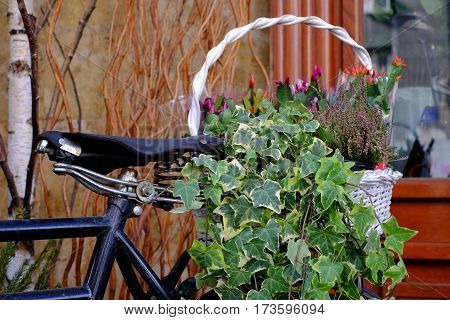 Decorative flower arangment in a basket on a bicycle