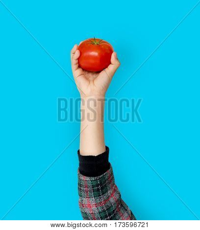 Hand Holding Tomato Isolated Concept