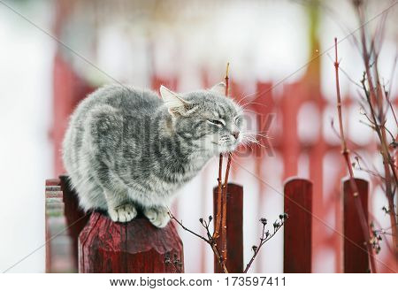 tabby cat walks in the spring in the village and fondled
