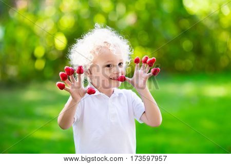 Child Picking And Eating Raspberry In Summer