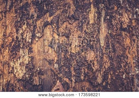 Tree Bark Texture. Wooden Texture. Toning Photo