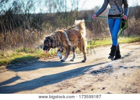 Caucasian Shepherd Dog Outdoor Exterior Portrait