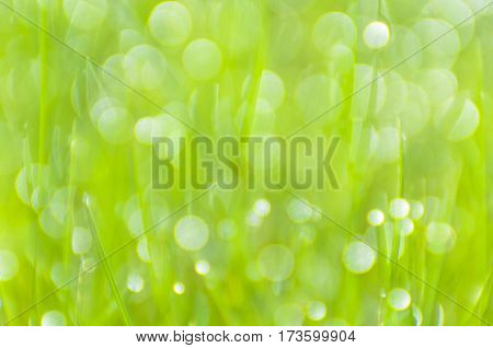 Soft focus.Bright background with green grass which is covered with dew.Colorful bokeh.SpringApril.