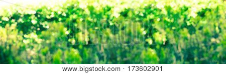 Abstract green unfocused long banner with bokeh. Vibrant colors. Happy Easter