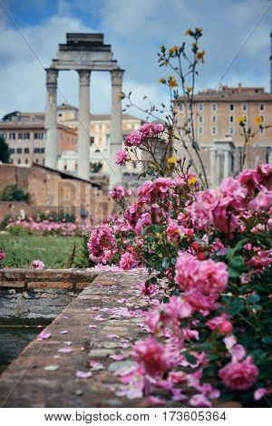 Rome Forum with ruins of historical buildings and flower in garden. Italy.