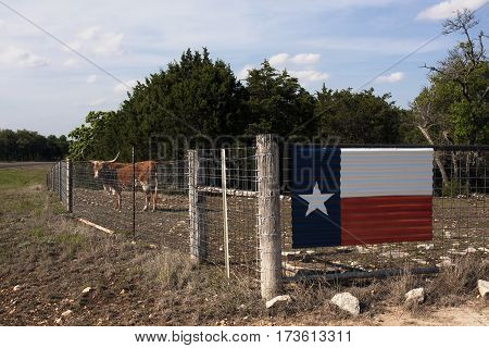 Texas longhorn steer in a fenced field alongside a back roads Texan highway.