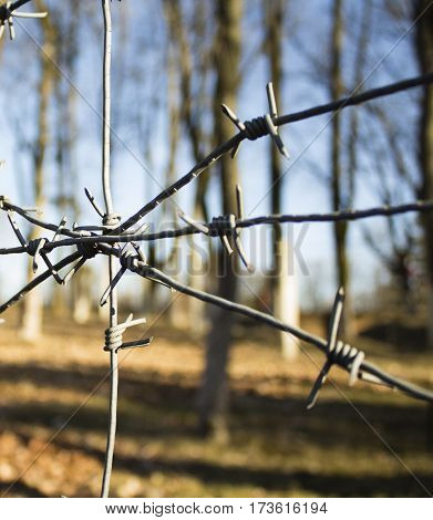Barbed wire with battlefield background grey tree.