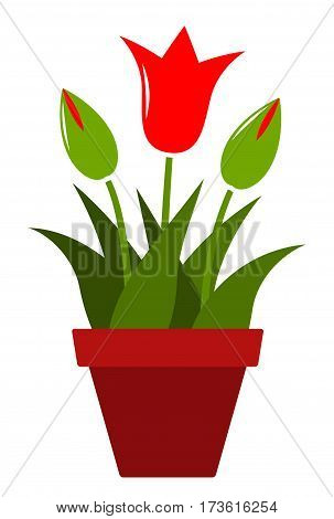 vector clump of red tulips in pot isolated on white background