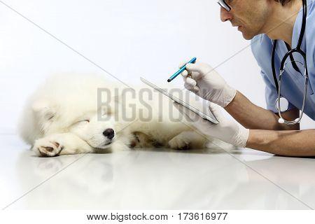 Veterinarian examining dog with digital tablet in vet clinic table
