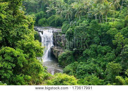 Waterfall in the greenery jungle. Indonesia. Bali.