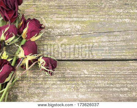 Dead Roses On Wood