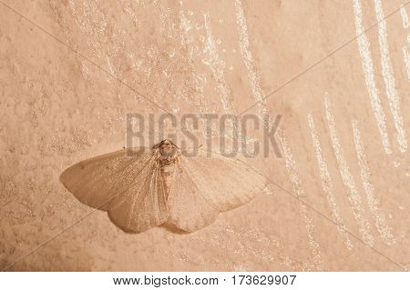 White butterfly sitting on a white wall. Macro photo.