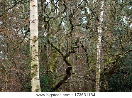 Mixed Trees