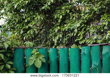 Green fence in the background of green foliage. Summer time. Space for text.