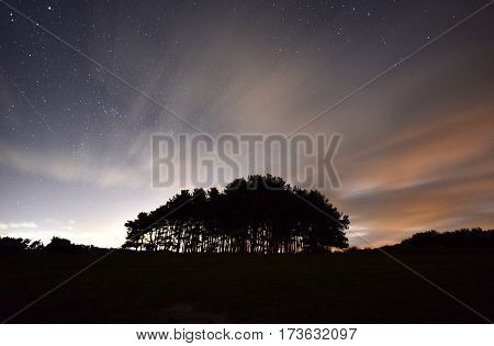 Stars at night over a clump of silhouetted trees