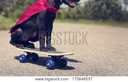 Dog Skateboard Street Canine Costume Pet