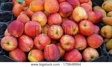 Bunch of Idared Red Apples Fruits at Market