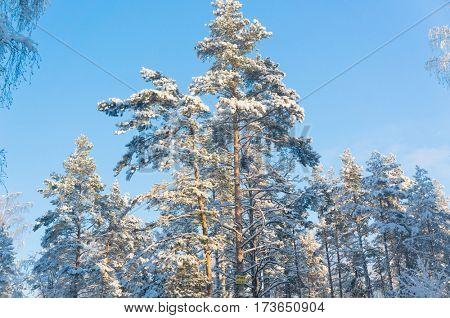 Sunny Winter Under Blue Skies