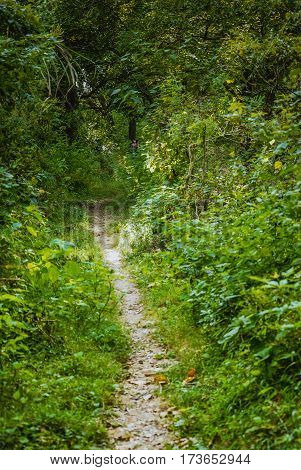 The hiking pathway scenery in the rural area