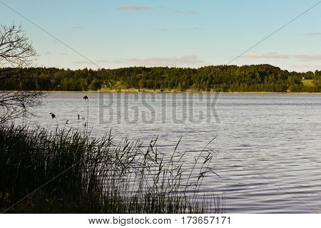 beautiful landscape with a lake on the other side there,  scraps of vegetation, summer, processed, skyline,