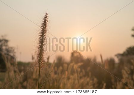 Mission grass sunset landscape background in front of sun source light