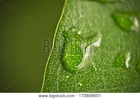 Drops of rain water on the green leaves