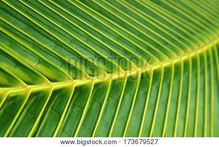 Vivid tropical green natural design texture background