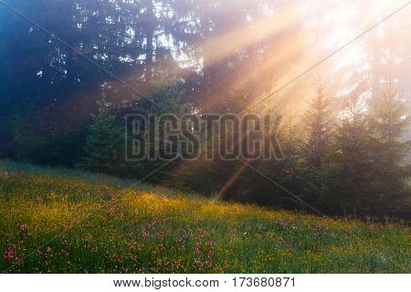 Vivid green hills in warm sunlight at twilight. Location place Carpathian, Ukraine, Europe. Dramatic and gorgeous morning scene. Artistic picture. Glowing filter. Discover the world of beauty.