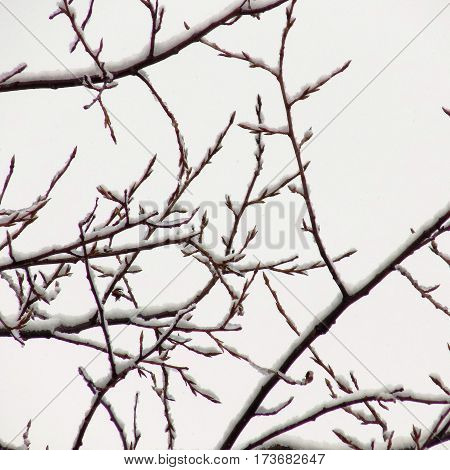 The snow on the branches of trees