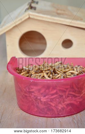 dry worm for feeding rodent or bird with lizard and little wooden house