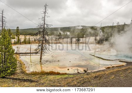 Colorful thermal pool along a side road in Yellowstone with trees both dead and alive