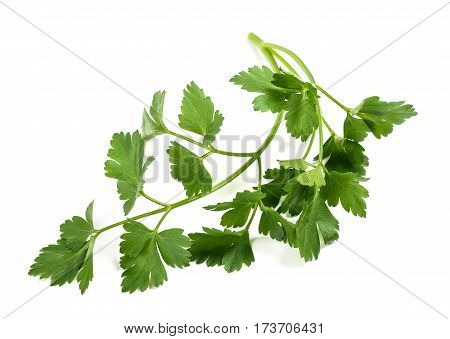 Fresh Parsley Sprig