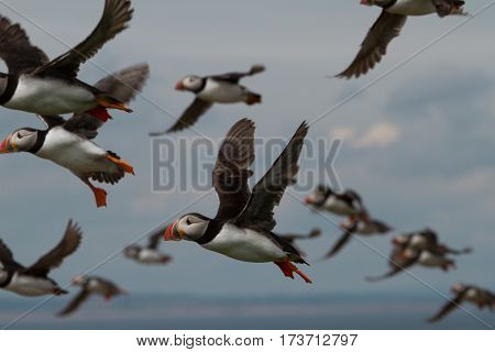 Puffins, puffins everywhere; a view from the Farne Islands