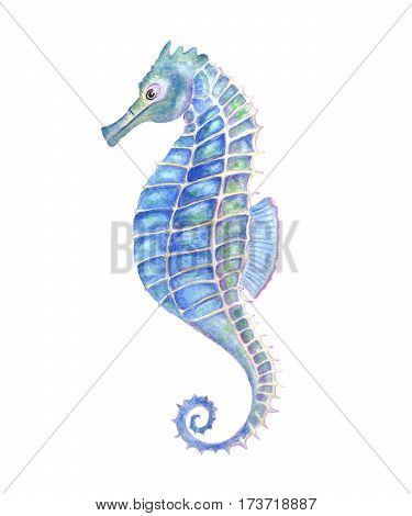 Watercolor seahorse aquarelle illustration. Watercolor blue sea-horse.