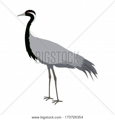 Demoiselle crane vector. Water birds wildlife concept in flat style design. Eurasia fauna illustration for encyclopedia, childrens books illustrating. Beautiful crane bird standing, isolated on white.