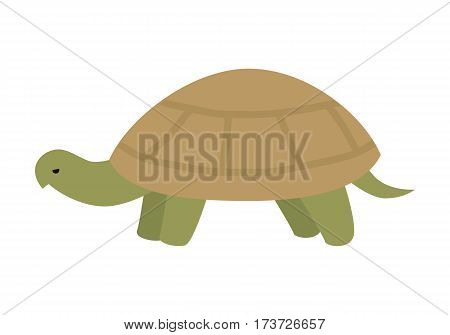 Turtle flat style vector. Wild animal with tortoiseshell. Fauna species. Slowness and wisdom symbol. For nature concept, children s books illustrating, printing materials. Isolated on white background